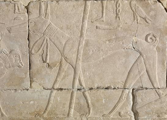 Bajorrelieve-Antiguo-Egipto-perro