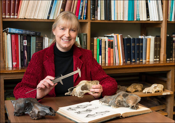 a doctora Mietje Germonpre, del Departamento de Paleontología del Real Instituto Belga de Ciencias naturales.Foto:Thierry Hubin - IRSNB