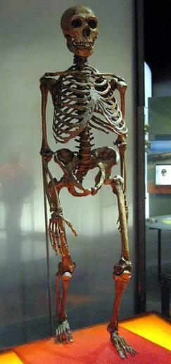 Esqueleto completo de un Neanderthal. Wikimedia Commons