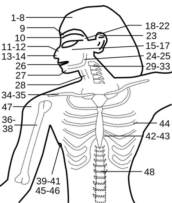 La distribución anatómica de los casos del papiro de Edwin Smith. (Sinuhe20 / CC BY-SA 3.0)