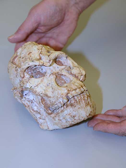 El estudio de Pie Pequeño tuvo la suerte de tener un excelente espécimen fósil con el que trabajar. Aquí se muestran sus dientes, ¡que se ven bastante bien incluso 3 millones de años después! (Fuente de luz de diamante)
