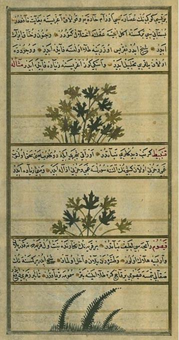 Manuscrito con ilustraciones de cáñamo, coliflor, y boja (Wikimedia Commons)
