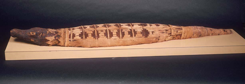 Momia de un cocodrilo. (National Museums Liverpool)