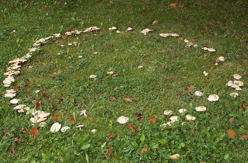 Anillo de hongos formando un círculo sobre la hierba. Antiguamente se creía que estos anillos eran portales para acceder al reino de las hadas, y por tanto, lugares peligrosos. (Unukorno, Flickr/CC BY-SA 2.0)