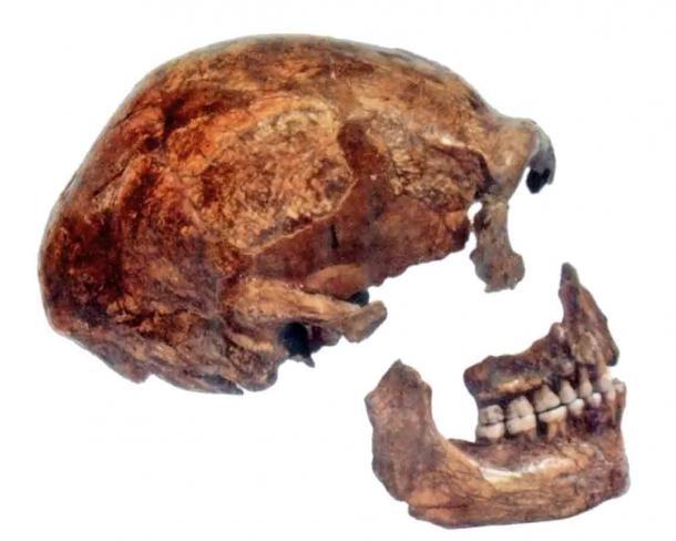 El cráneo neandertal del norte de Europa, Spy 2, encontrado en 1886 en la cueva del espía de Bélgica. (Nosotros El / CC BY-SA 3.0)