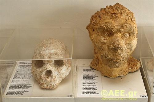 petralona-cave-skull-4.jpg