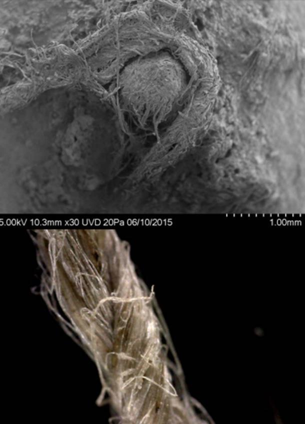 Arriba: foto SEM del cordón neandertal de Abri du Maras. (Crédito: M-H. Moncel) Abajo: primer plano del cordaje moderno de lino que muestra una construcción de fibra retorcida. (Crédito: S. Deryck)