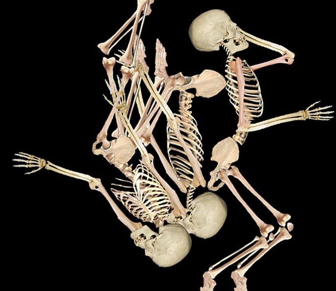 Los investigadores reconstruyeron la posición de los tres hombres descubiertos en 1964 en una tumba Nativo Americana de California. (Imagen: Jelmer W. Eerkens)