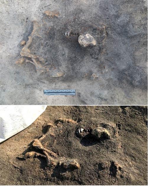 Los restos del perro aún se encuentran en el sitio, parcialmente excavados. (Museo Carl Persson/ Blekinge)