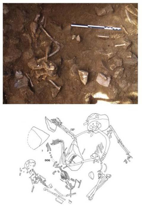 Primera Imagen: restos de perro adulto en conexión anatómica parcial en La Serreta. Segunda Imagen: perro en conexión anatómica entre esqueletos humanos, en la necrópolis Bòbila Madurell. Crédito: UB-UAB