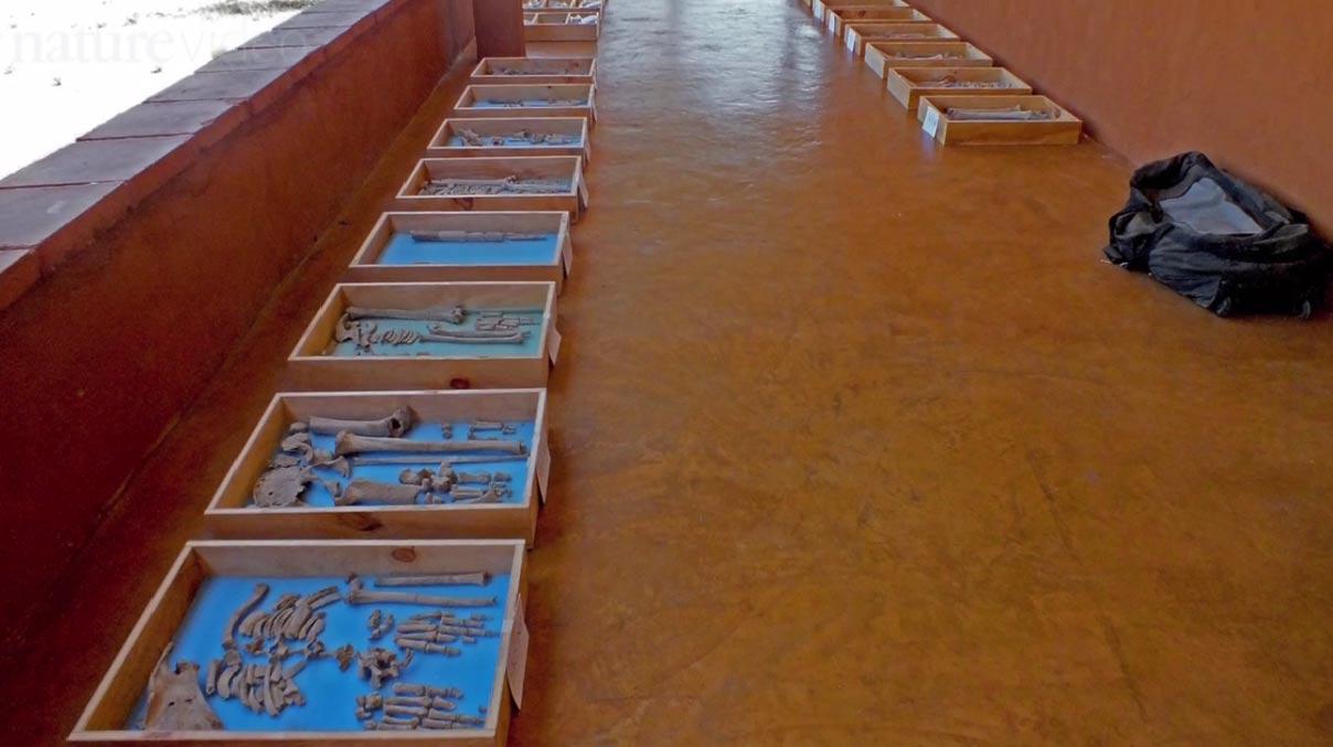 Los restos de las desafortunadas víctimas de este acto de guerra. Fotograma de un vídeo de Nature (ver más abajo)