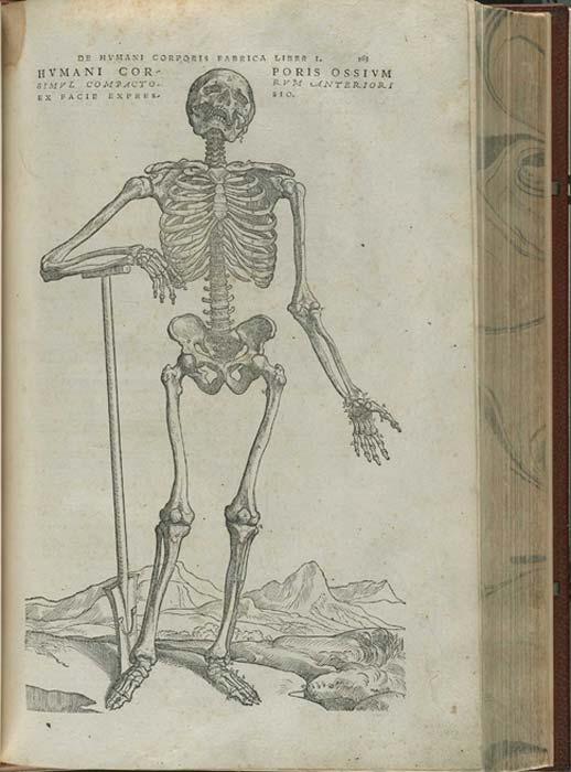 Este grabado esquelético del libro de Andreas Vesalius fue reproducido en el libro falso. (Biblioteca Nacional de Medicina)