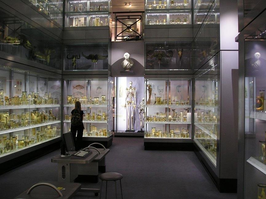 """El esqueleto de Charles Byrne, """"El Gigante Irlandés"""" expuesto en Londres, 2007. (StoneColdCrazy / CC BY SA)"""