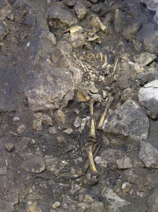 Uno de los esqueletos hallados en la cueva de El Portalón objeto del presente estudio (MyNewsDesk)