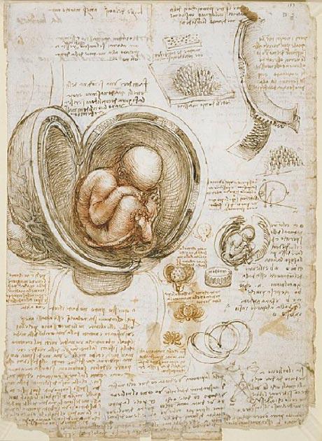 Estudios del feto en el útero por Da Vinci. (Dominio público)