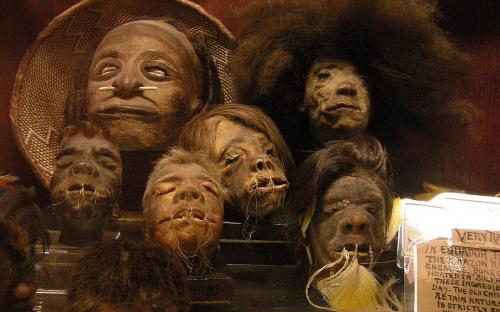 """Cabezas encogidas en la colección permanente de """"Ye Olde Curiosity Shop"""", Seattle, estado de Washington, EE. UU. (Imagen: Wikipedia)"""
