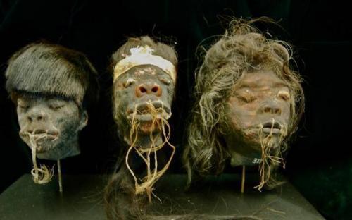 Cabezas encogidas en el Museo del Hombre de San Diego (Imagen: www.museumofman.org)