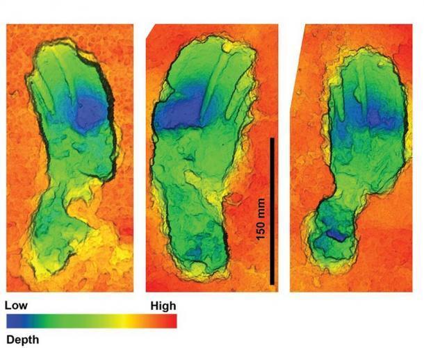Escaneos 3D con profundidad de color de algunas de las huellas fosilizadas descubiertas. La forma curva distintiva es una característica distintiva de alguien que camina mientras lleva una carga. (Universidad de Bournemouth)