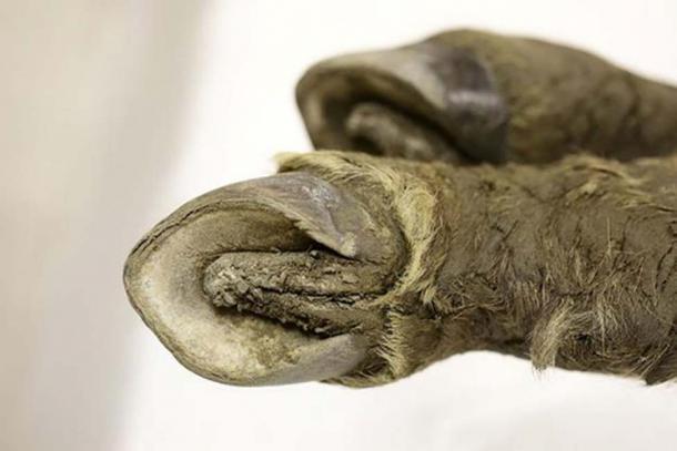 El potro de 42.000 años. Fotos: Universidad Federal del Noreste