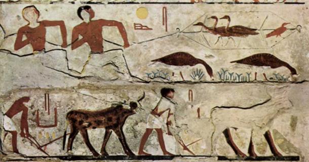 Pintura de la IV Dinastía de Egipto: Atrapar (cosechar) pájaros; Arando campos. (Dominio público)