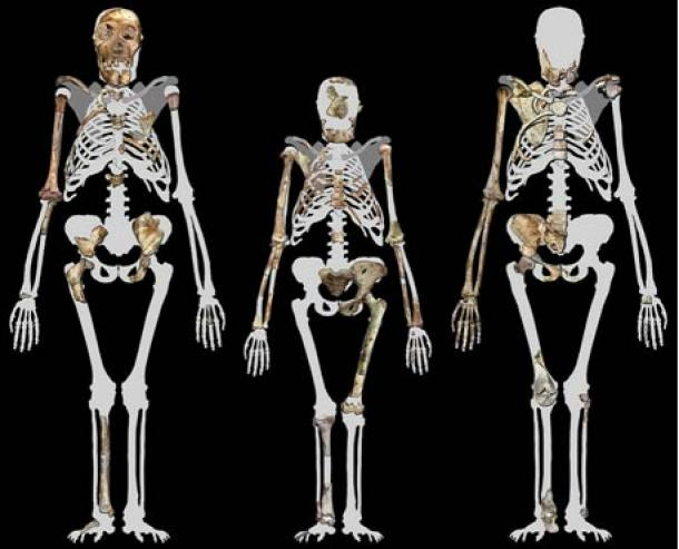 Australopithecus-sediba--y-Lucy.jpg