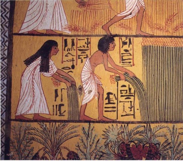 Campesinos egipcios cosechando papiro, pintura mural en Deir el-Medina (época Ramésida temprana)