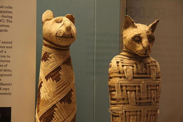 Momias de animal en el Museo Británico.