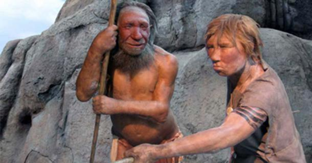 Homo neanderthalensis masculino y femenino en el Museo Neandertal, Mettmann, Alemania. (Uniesert / Frank Vincentz / CC BY SA 3.0)