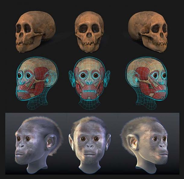 Niño Taung - Reconstrucción forense facial. (Cicero Moraes / CC BY-SA 4.0)