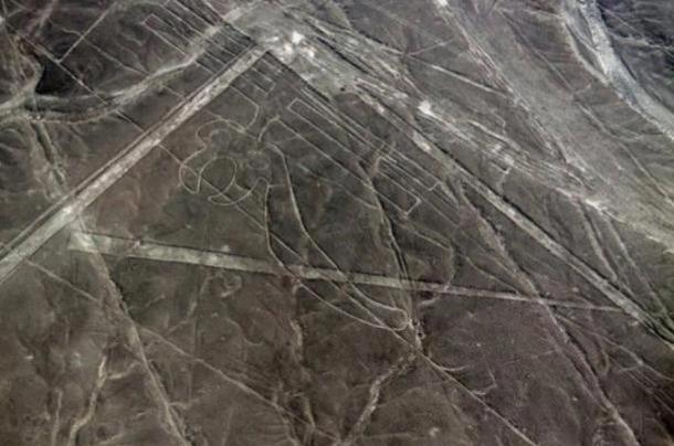 Geoglifo del loro en Nazca