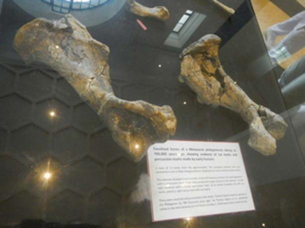Estos huesos fosilizados muestran evidencia de marcas de corte hechas por humanos primitivos, pero no grabados deliberados. (Judgefloro / Dominio Público)