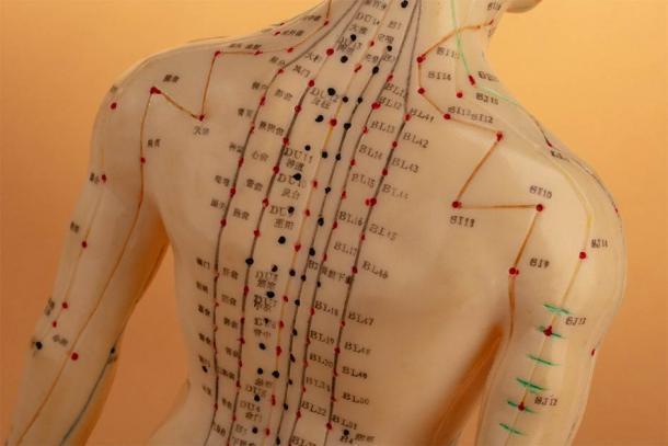 Las principales líneas de los meridianos de acupuntura en la parte posterior del cuerpo humano (Birgit Reitz-Hofmann / Adobe Stock)