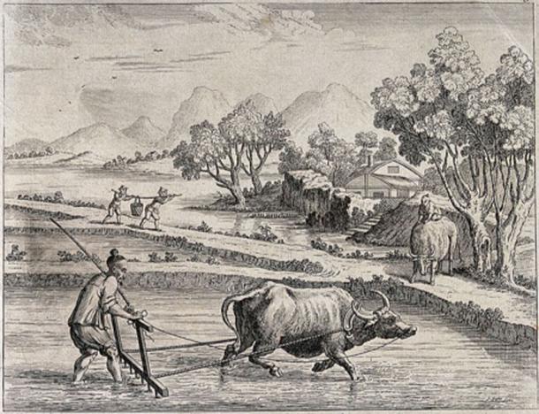 Agricultura: rastrillar arrozales en China con un arado tirado por bueyes. Grabado de J. June después de Augustin Heckel. (Imágenes de bienvenida / CC BY 4.0)