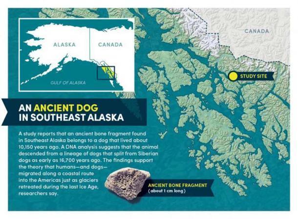 El antiguo fragmento de hueso de perro y un mapa del área de estudio. (Bob Wilder / Universidad de Buffalo)