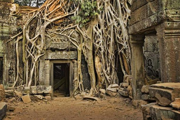 Angkor Wat perdió en la jungla. (David Davis / Adobe Stock)