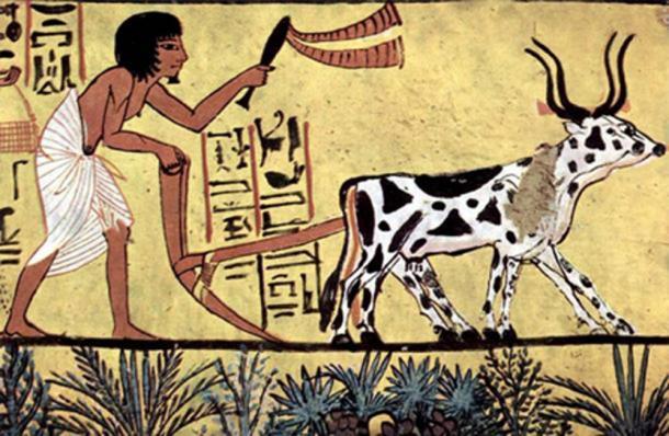 Arando con ganado con cuernos en el antiguo Egipto. Pintura de la cámara funeraria de Sennedjem, c. 1200 a. C. (Dominio publico)