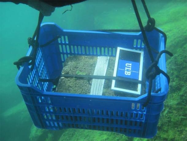 Los artefactos que se transportan en un recipiente de plástico (C. Delaere / Antiquity Publications Ltd)