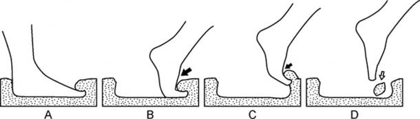 Basados en las pruebas de impresión de pies que realizaron, los científicos creen que la impresión proviene de un paso hacia abajo. El diagrama muestra los diferentes tipos de impresiones que se podrían hacer con diferentes ángulos y presión. (Universidad Austral de Chile)