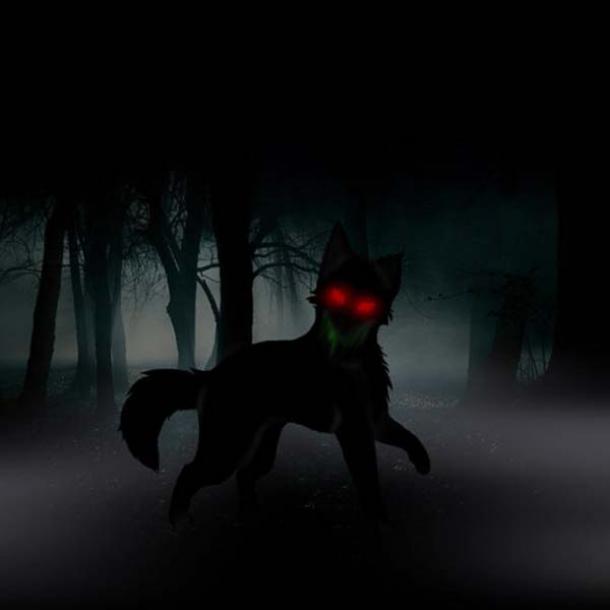 Un perro negro malvado en el bosque. (John Knifton)