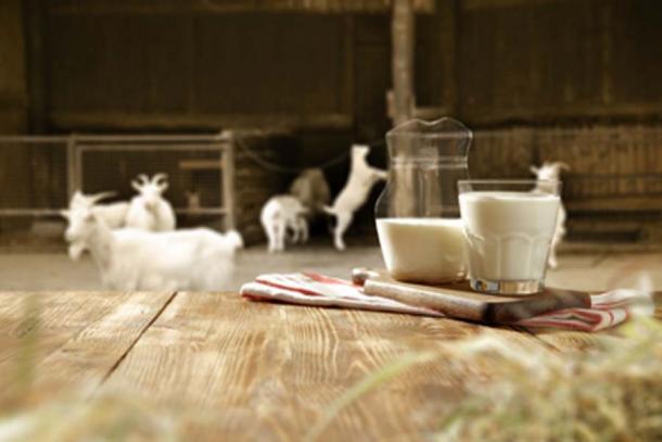 Los granjeros neolíticos consumieron leche de vaca, oveja y cabra. (magdal3na / Adobe Stock)