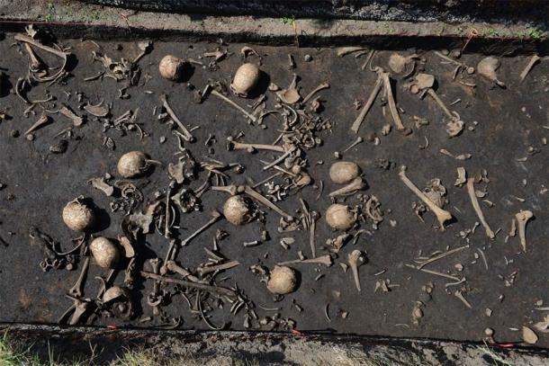 Hasta ahora, se han descubierto huesos de más de 100 individuos en el campo de batalla. (©: Stefan Sauer / Proyecto Valle de Tollense)