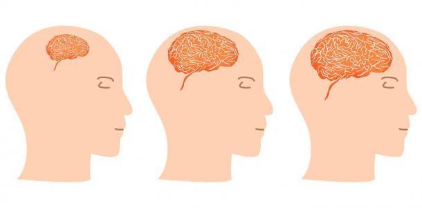 Entre 2 millones a.C., y 300.000 a.C., el cerebro humano se expandió de 650 a 1500 centímetros cúbicos, un aumento de más del 200%. (Jimmyi23 / Adobe Stock)