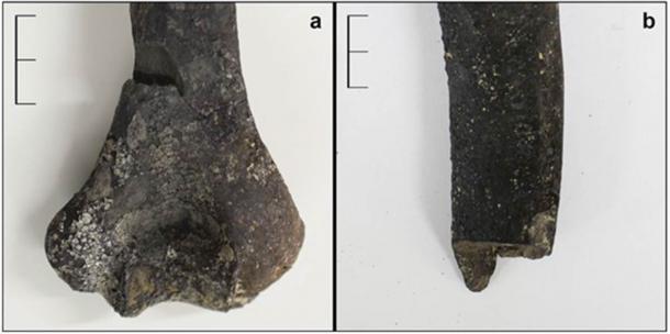 Huesos quemados encontrados en el sitio de la masacre prehistórica española. (Antiquity Publications Ltd)