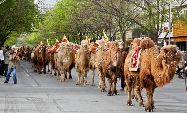 camellos-mercaderes-d-té.jpg