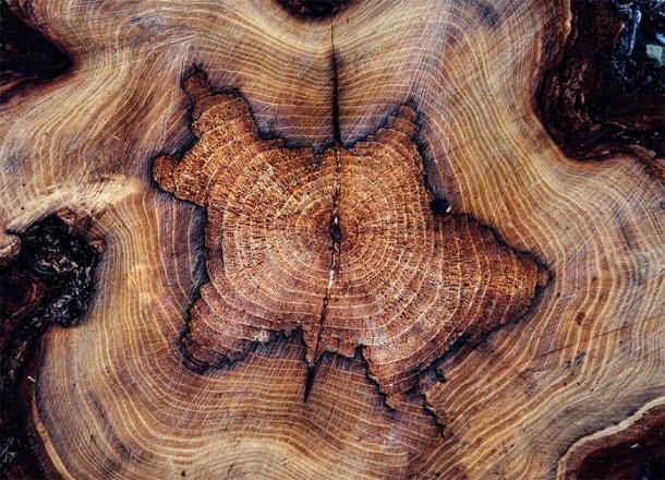 El carbono en el anillo de un árbol se refleja cuando el árbol estaba fotosintetizando y, por lo tanto, sacando carbono de la atmósfera. (Pixabay License)