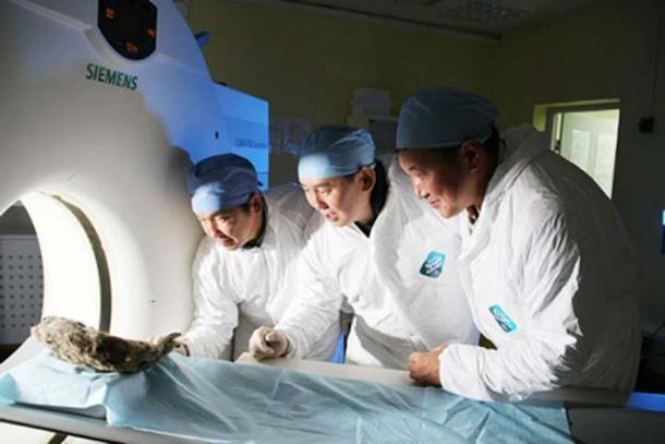 Se están realizando pruebas en los leones para extraer tanta información como sea posible. (Tiempos siberianos)