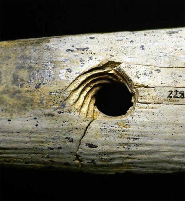 Cerca de la herramienta para hacer cuerdas de hueso de mamut que muestra las incisiones espirales cortadas con precisión. (Universidad de Tübingen)