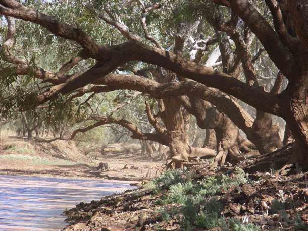 """El Combo Waterhole Queensland fue probablemente el arquetipo del billabong en la canción """"Waltzing Matilda"""" de Banjo Paterson. (Alun Hoggett / CC BY 3.0)"""
