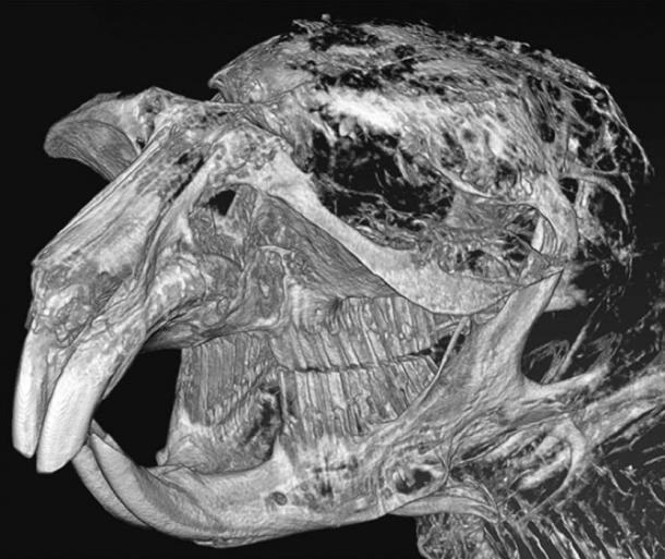 Modelo informático de la parte anterior del cráneo. Imagen: Alexey Lopatin et al.