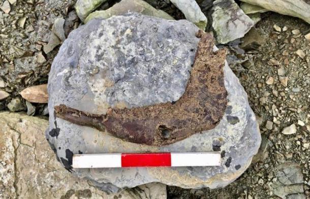 La mandíbula de la vaca se recuperó de la sección de la costa erosionada donde se encontró la piedra incisa en la bahía de Skaill. ( Sigurd Towrie / Instituto de Arqueología UHI)